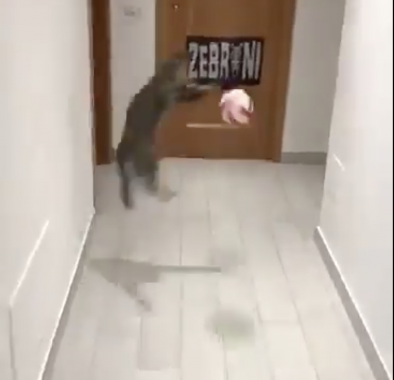 Mittens' making another spectacular save in the hallway.