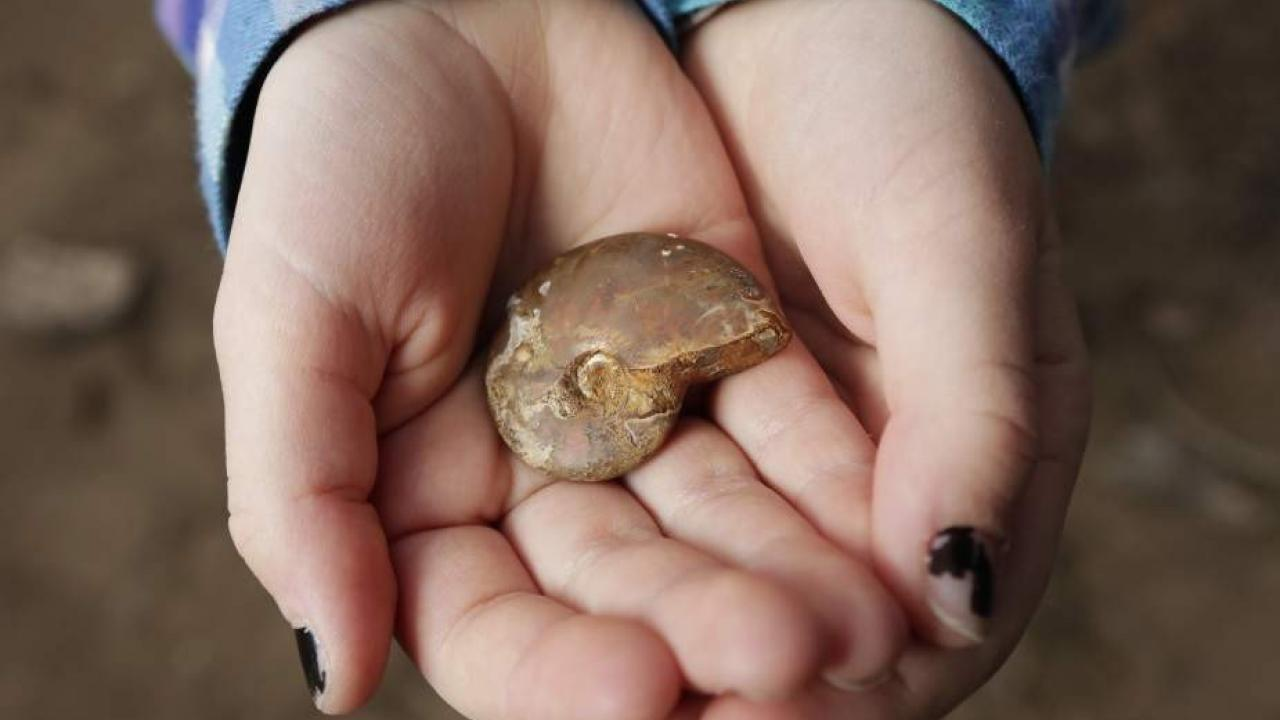 Girl finds fossil on soccer field