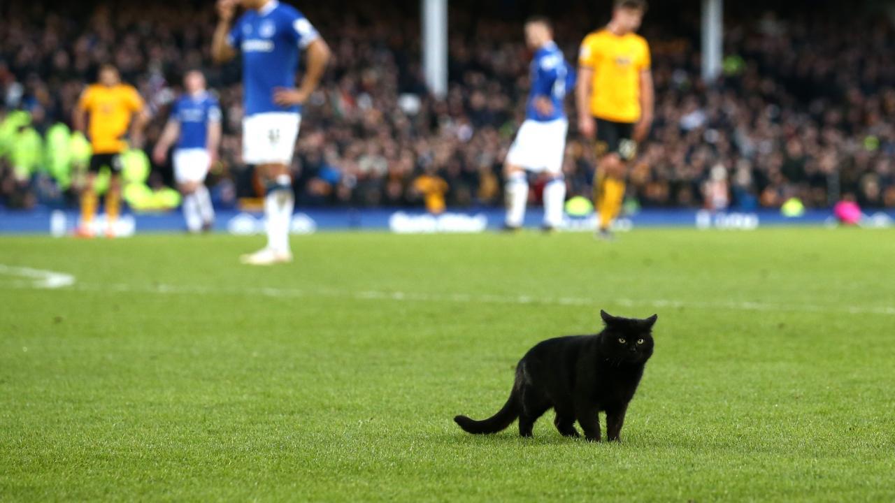 Animals on soccer fields