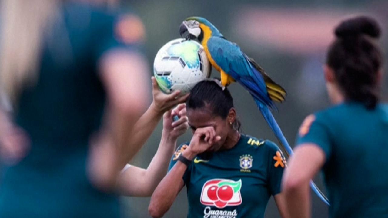 Macaw Lands On Bruna Benites During Brazil Women's Practice
