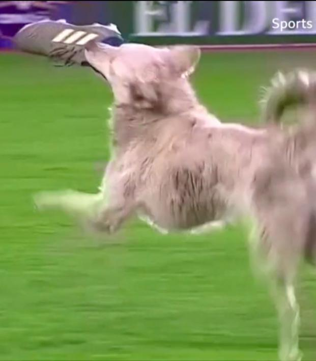 Pitch-invading dog