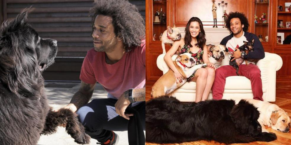 Marcelo, his wife, and their six dogs