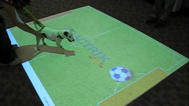 Interactive Floor Display - Dog Plays Virtual Soccer
