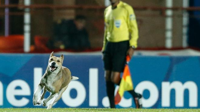 Dog runs on pitch during Argentina match.