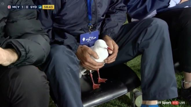 Seagull injured and revived in Australia