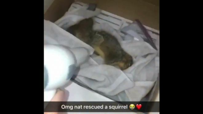 Natalie Belsito rescued a squirrel