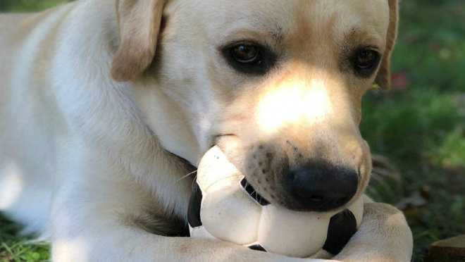 Soccer ball toy for dogs