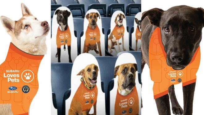 Philadelphia Union Dogs