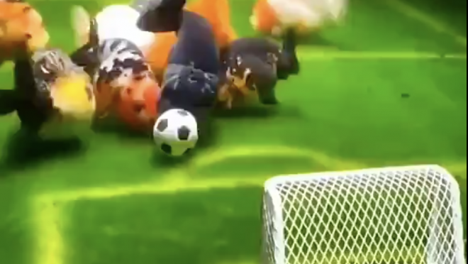 Animals playing soccer