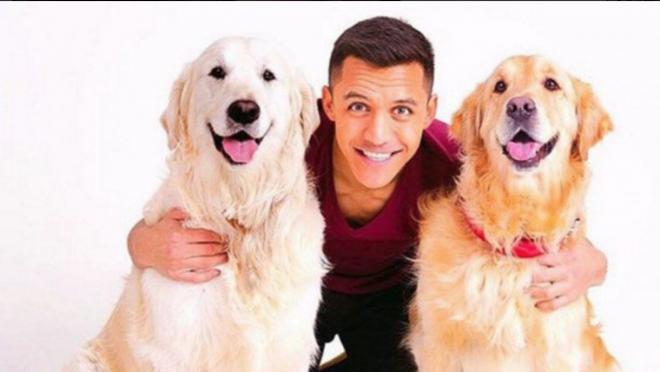 Alexis Sanchez Dogs