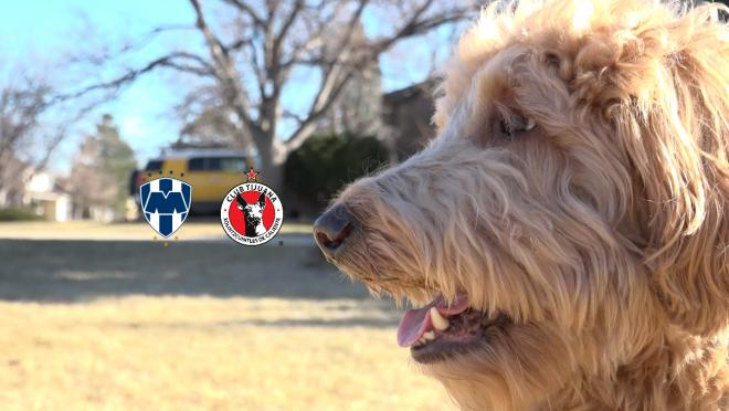 Chewie The Match Predicting Dog: Tijuana Vs Monterrey