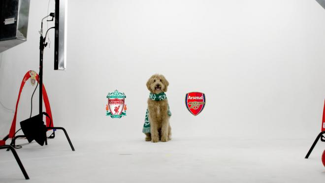 Chewie The Match Predicting Dog: Arsenal vs Liverpool