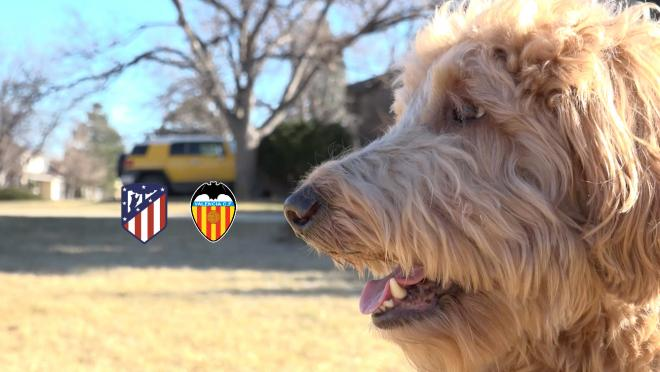 Chewie The Match Predicting Dog Atletico Madrid vs Valencia