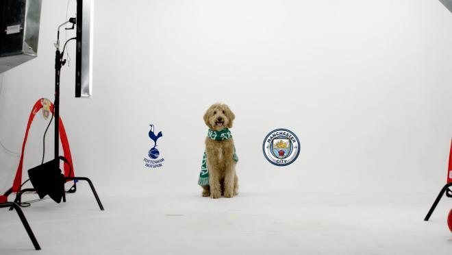 Chewie The Match Predicting Dog Manchester City vs Tottenham