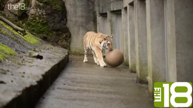 Animals Play Soccer