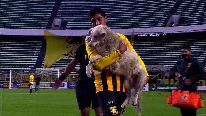 Dog Interrupts Match In Bolivia