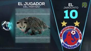 Liga MX Possum