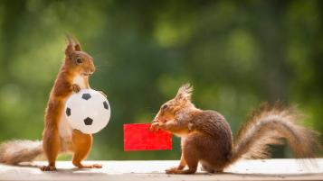 Animals predicting World Cup