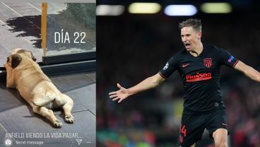 Atleti Striker Llorente Rubs Salt In Liverpool Wounds By Renaming Dog Anfield