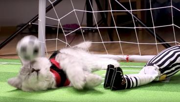 Cat Goalkeeper Could Be Premier League Golden Paw Winner